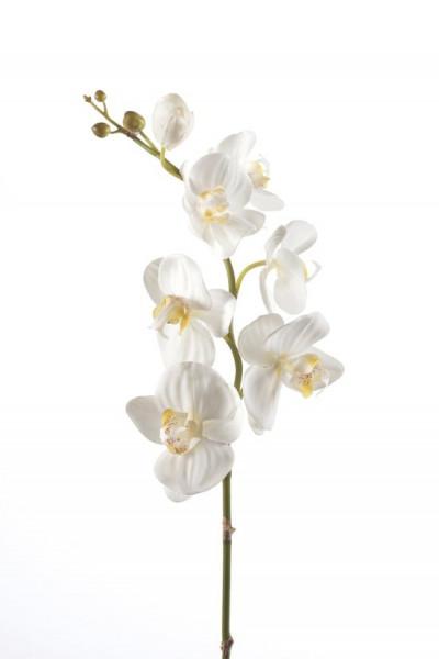 Emerald - Phalaenopsistak - Orchidee - Kunstbloem - 75 cm - 1 stuks - Creme